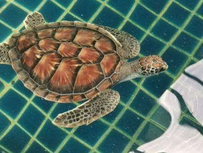 Mai Khao Marine Turtle Foundation