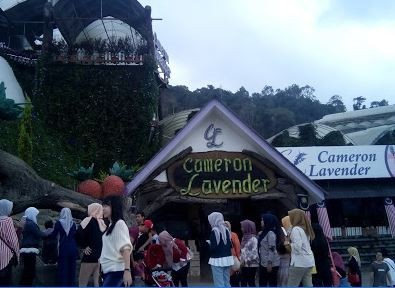 Best Things To Do In Cameron Highlands 1