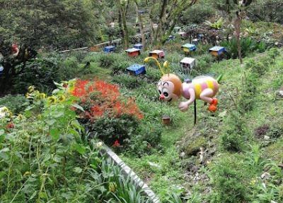 Best Things To Do In Cameron Highlands 2