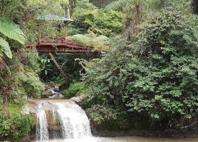 Best Things To Do In Cameron Highlands 9